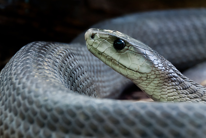 Rajeunissement : la mue du serpent